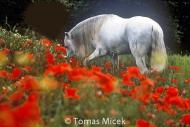 HORSES_2_004