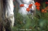 HORSES_2_005