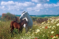 HORSES_2_006