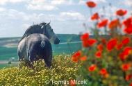 HORSES_2_007