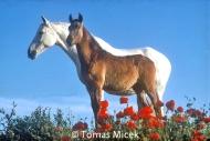 HORSES_2_008