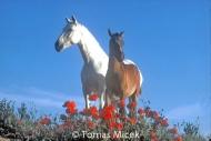 HORSES_2_009