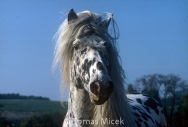 HORSES_2_010