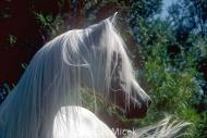 HORSES_2_011