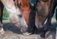HORSES_2_012