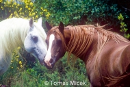 HORSES_2_013