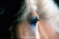 HORSES_2_014