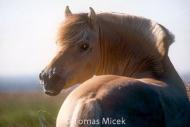 HORSES_2_015