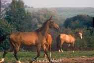 HORSES_2_016