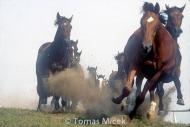 HORSES_2_017