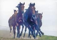 HORSES_2_018