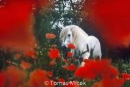 HORSES_2_019