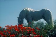 HORSES_2_020