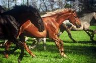 HORSES_2_021