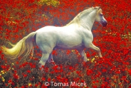 HORSES_2_022