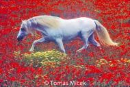 HORSES_2_023