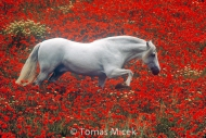 HORSES_2_024