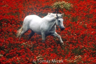 HORSES_2_025