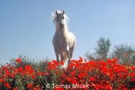 HORSES_2_026