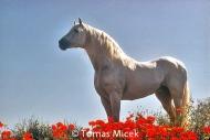 HORSES_2_027