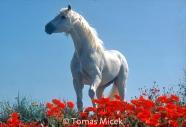 HORSES_2_028