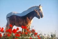 HORSES_2_029