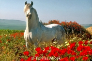 HORSES_2_030