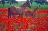 HORSES_2_031