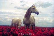 HORSES_2_032