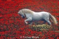 HORSES_2_034