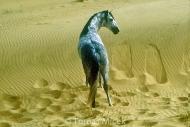HORSES_2_036