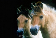 HORSES_2_037
