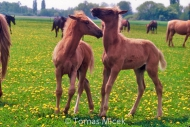 HORSES_2_038