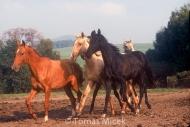HORSES_2_039