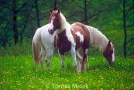 HORSES_2_040