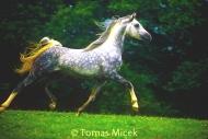 HORSES_2_041
