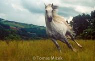 HORSES_2_042