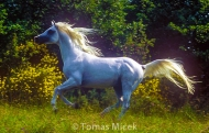 HORSES_2_043