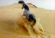 HORSES_2_044