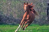 HORSES_2_045