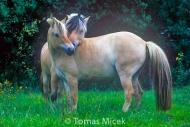 HORSES_2_046