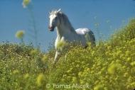 HORSES_2_047