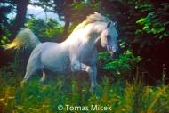 HORSES_2_048