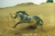 HORSES_2_049