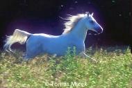 HORSES_2_050
