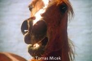 HORSES_2_052
