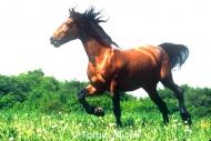 HORSES_2_053