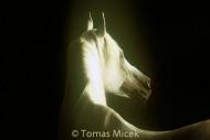 HORSES_2_054