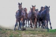 HORSES_2_055