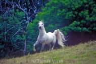 HORSES_2_058